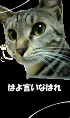 きのり.jpg